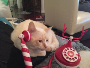 a white cat calling using a Christmas theme telephone
